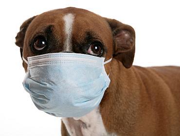 bacterie infectie ontsteking honden