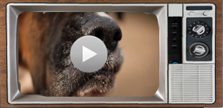 video's hond